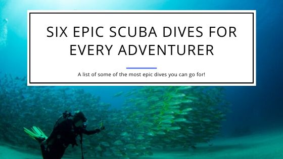 Six Epic Scuba Dives for Every Adventurer