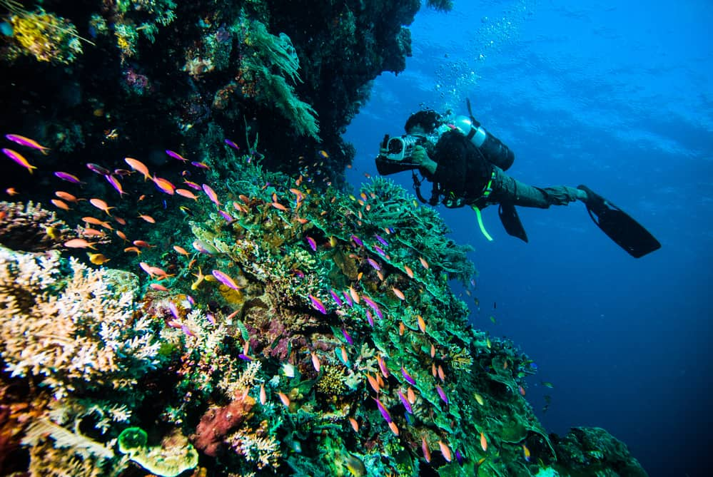 Scuba sightseeing under water