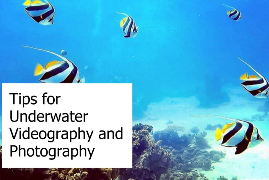 Tips on how you can improve your videos and photos during scuba diving