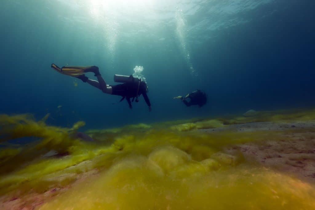 Drift diving lets you enjoy your surroundings while you're using the currents to move you around