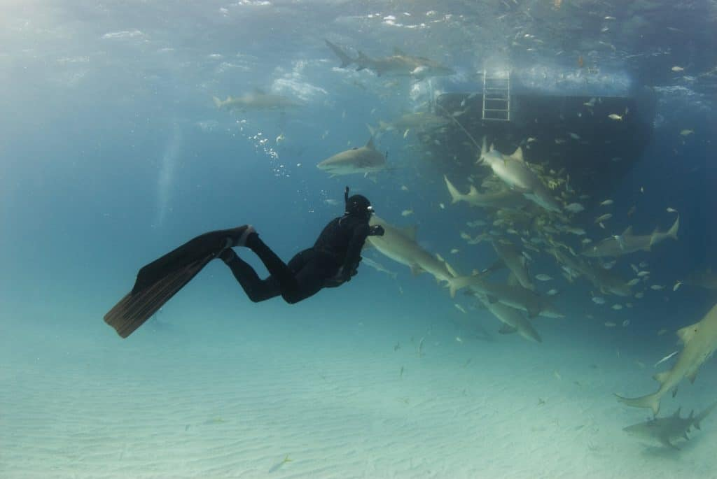 Freediver - What are the differences compared to scuba and snorkelling