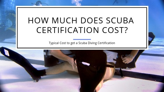 How much will Scuba Diving Certification Cost