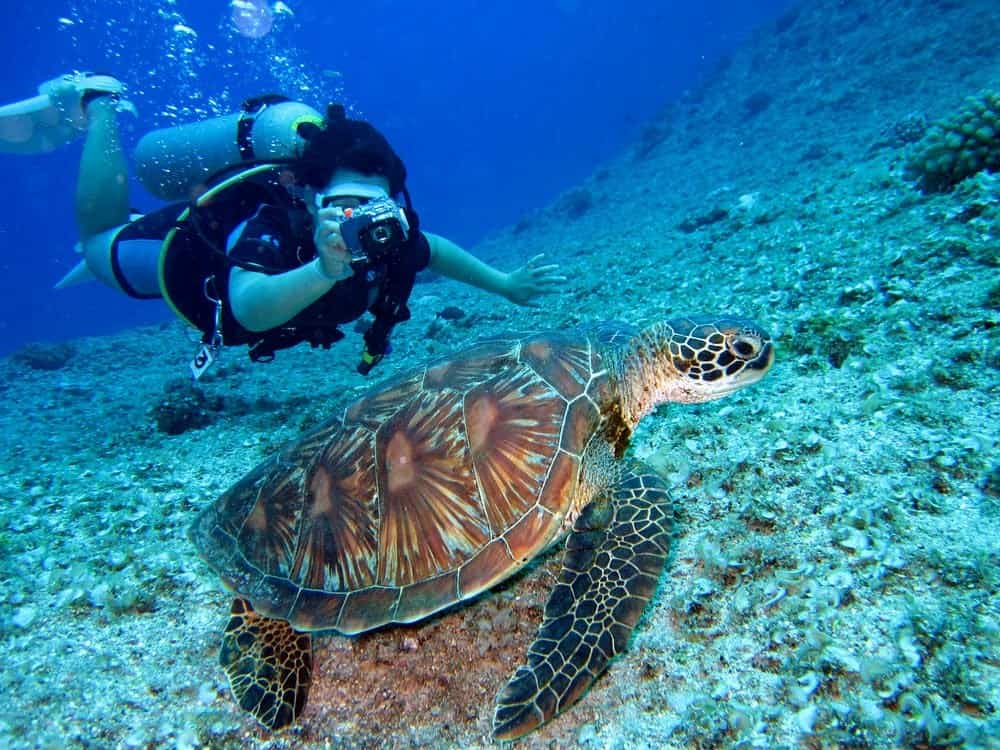Exciting Experiences Scuba Diving no matter the cost