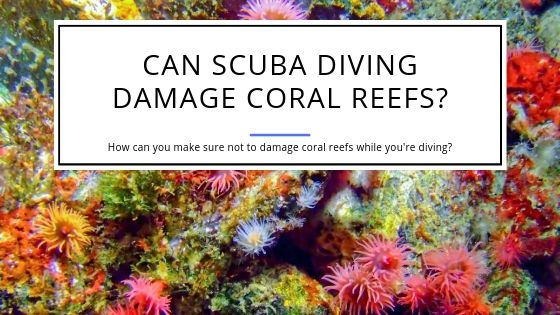 Can Scuba Diving Damage Coral Reefs