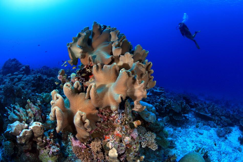 How damaging can scuba diving be for coral reefs