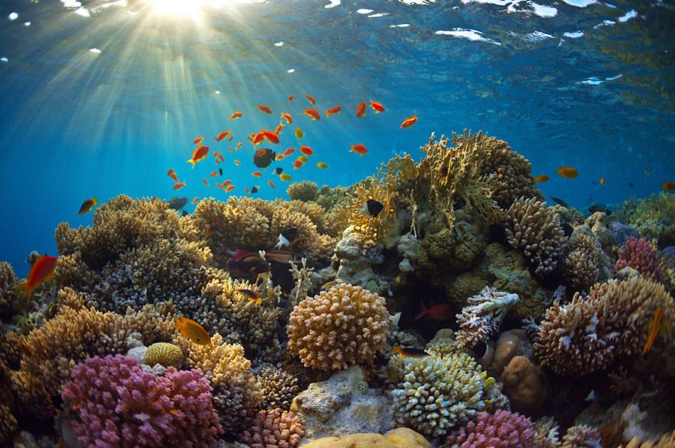 Is Scuba Diving damaging to Coral Reefs