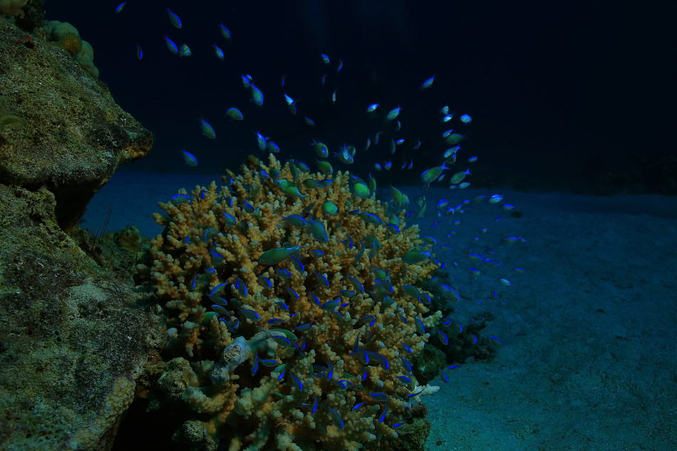 Making Photos and Videos during a night snorkel trip