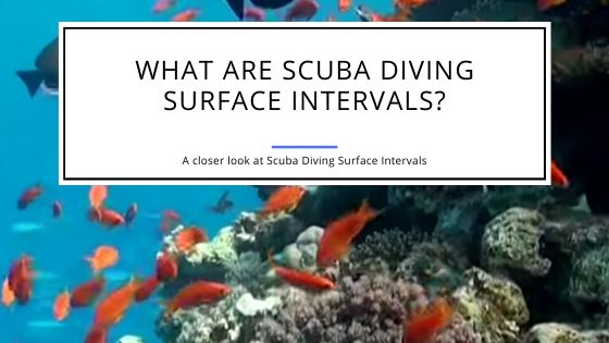 Scuba Diving Surface Intervals - What Are They