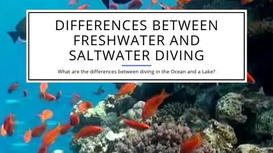 Differences Between Freshwater and Saltwater Diving