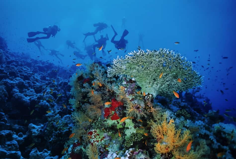 Different marine life in saltwater vs freshwater - There are more salt water bodies around the world for a scuba diver to explore!