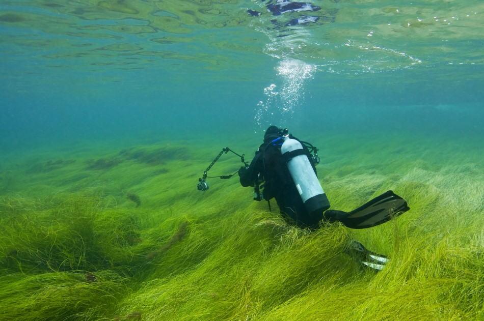 Different scuba diving certification levels