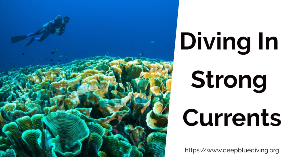 How To Dive Safely in Strong Currents