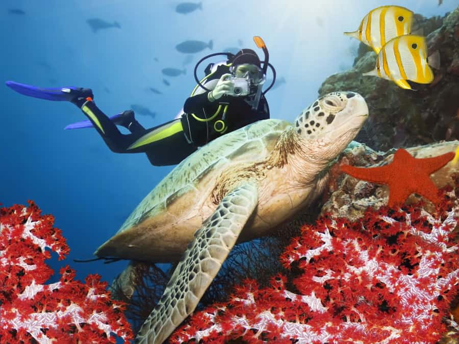Diving with Turtles in the Caribbean