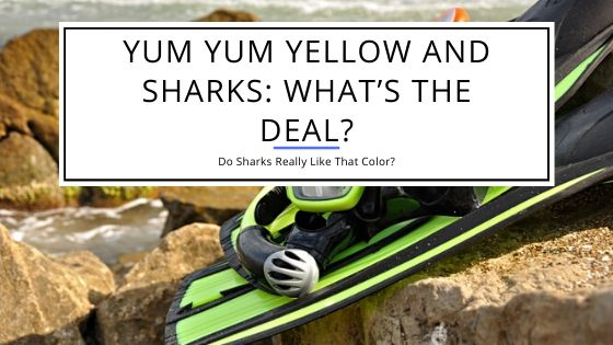 Yum Yum Yellow – Do Sharks Really Like That Color