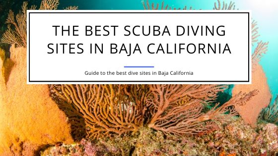 Best Scuba Diving Sites in Baja California