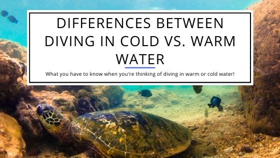 Differences between Diving In Cold vs Warm Water