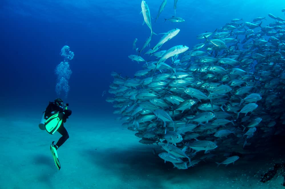 Diving with Fish in Baja California