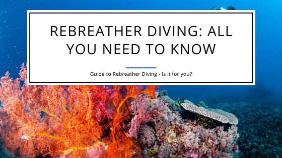 Rebreather Diving All You Need to Know