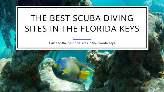 The Best Scuba Diving Sites in the Florida Keys