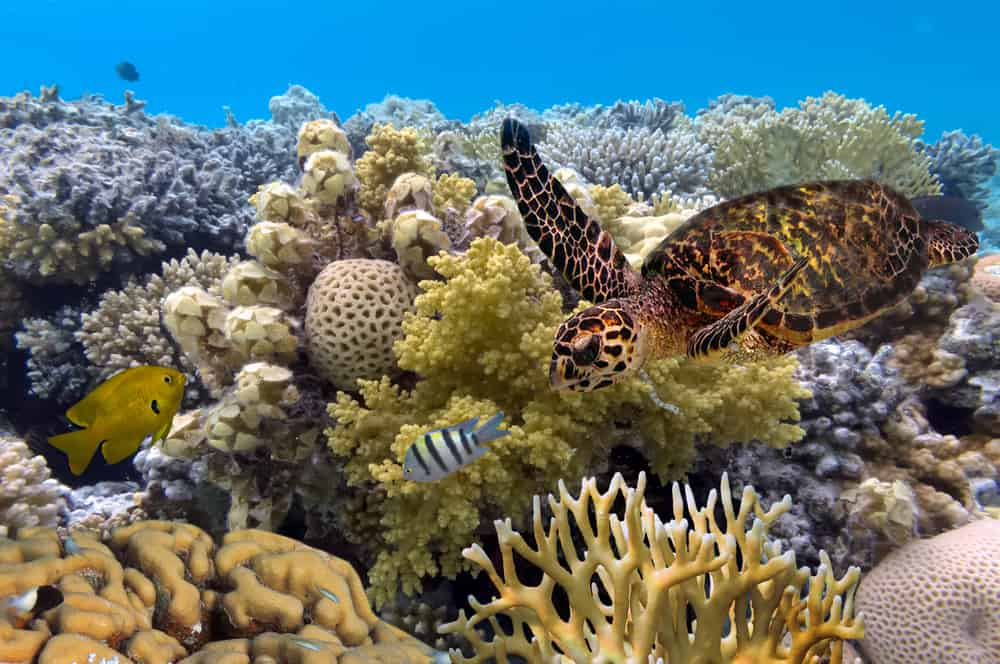 Aquatic Life at the Great Barrier Reef