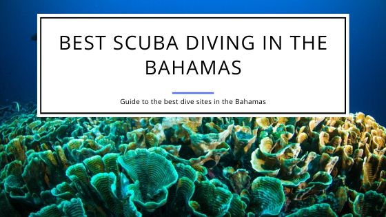 Best Scuba Diving in the Bahamas