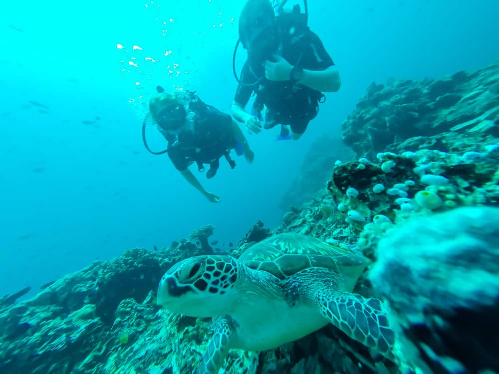 Aquatic life to be seen when Scuba Diving in Indonesia - Two divers and a turtle