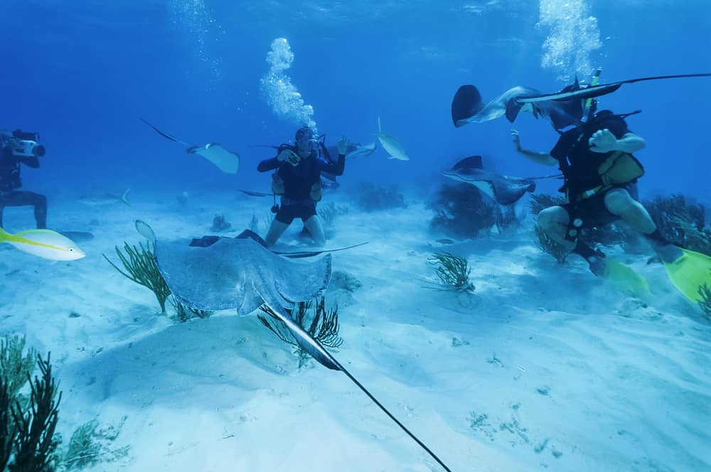 Diving with Stingrays in the Cayman Islands
