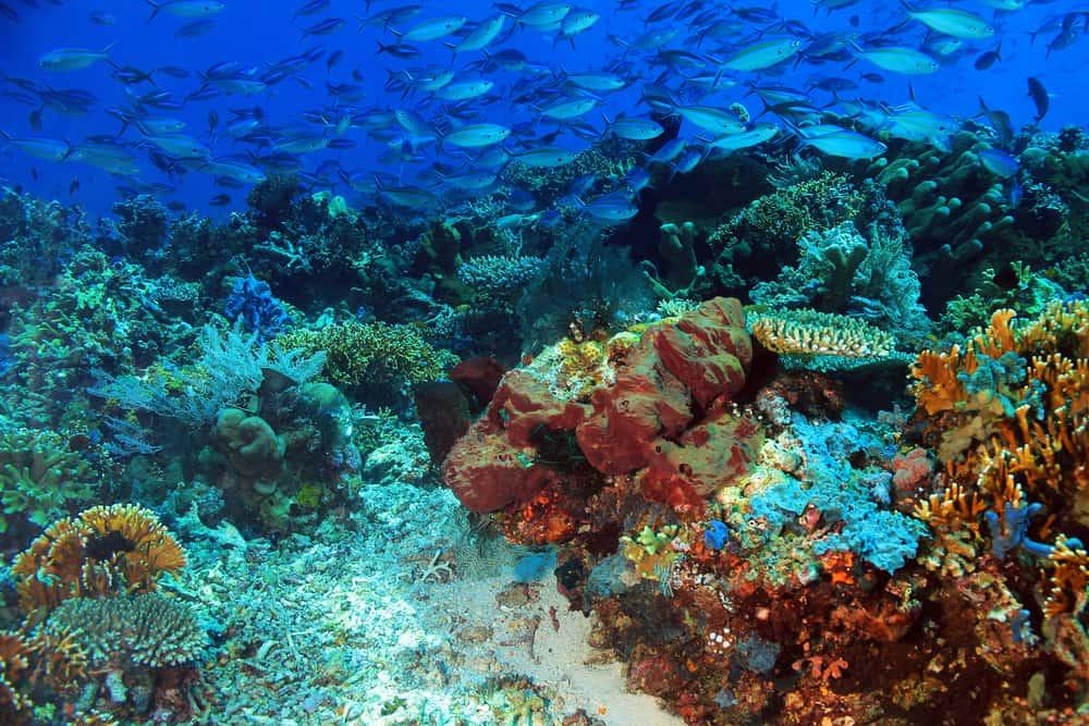 Fish over Komodo Coral Reef