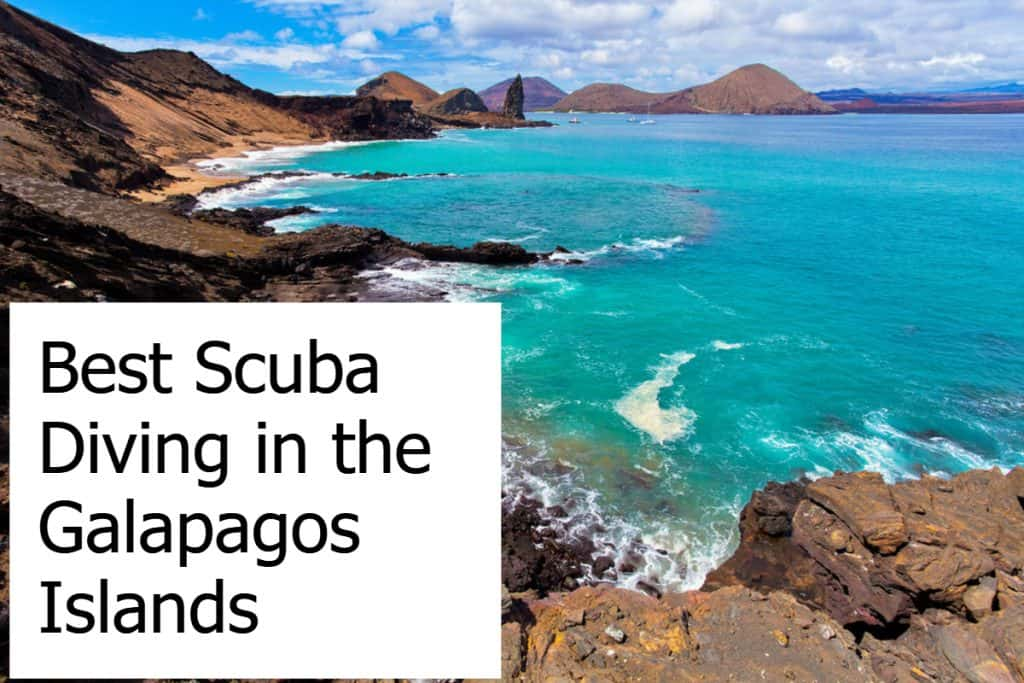 Best Scuba Diving in the Galapagos Islands