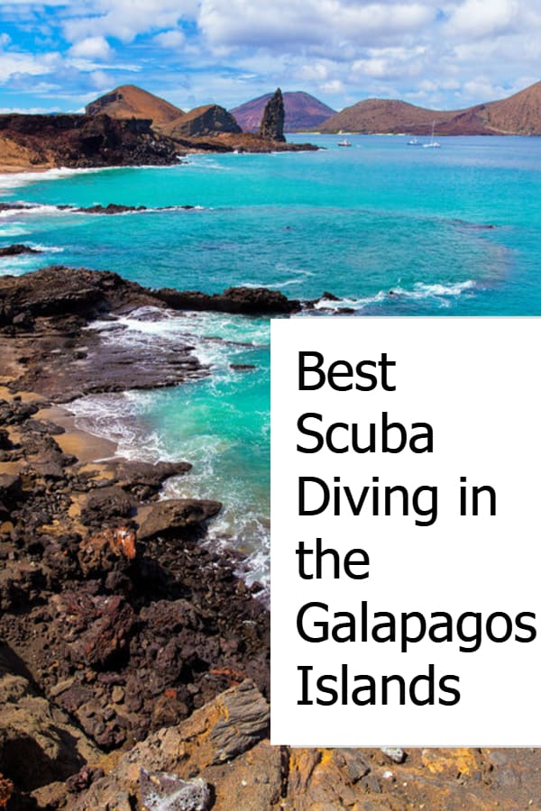 Best Scuba Diving in the Galapagos Islands Pin