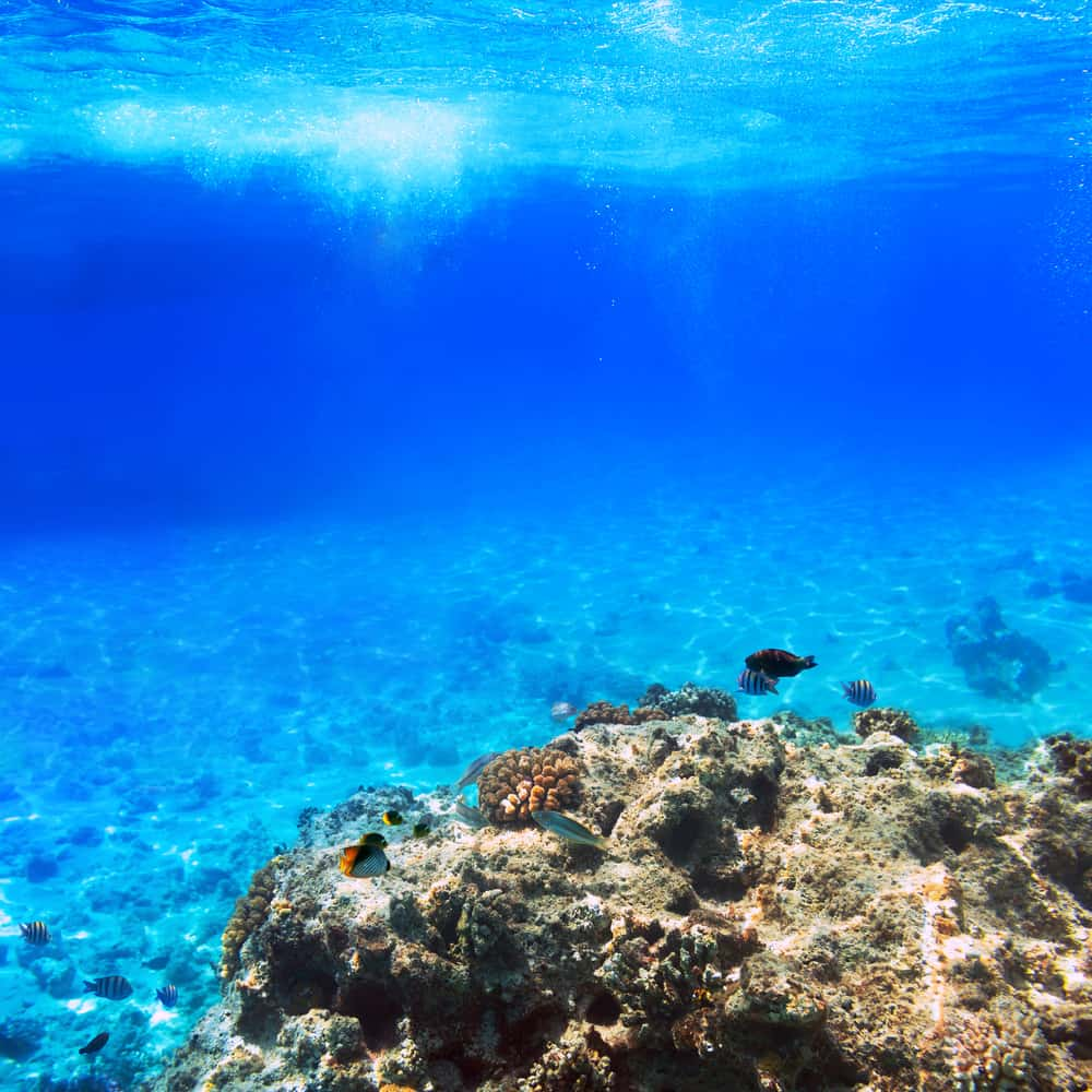 Situations to cause panic attacks underwater