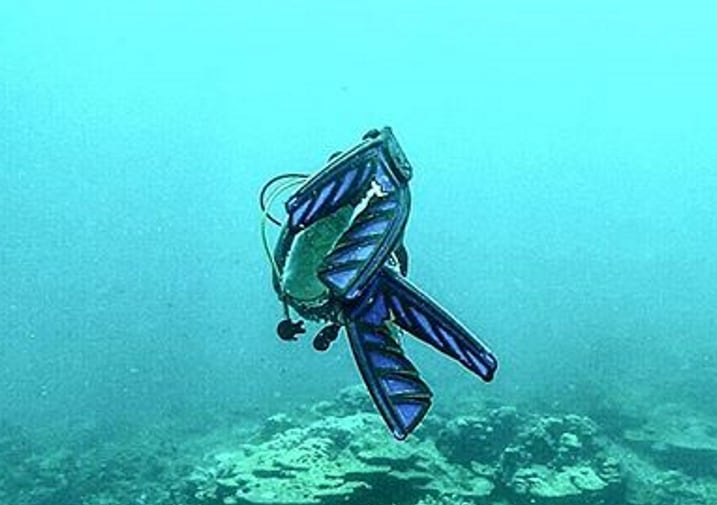 Diving with Split Fins