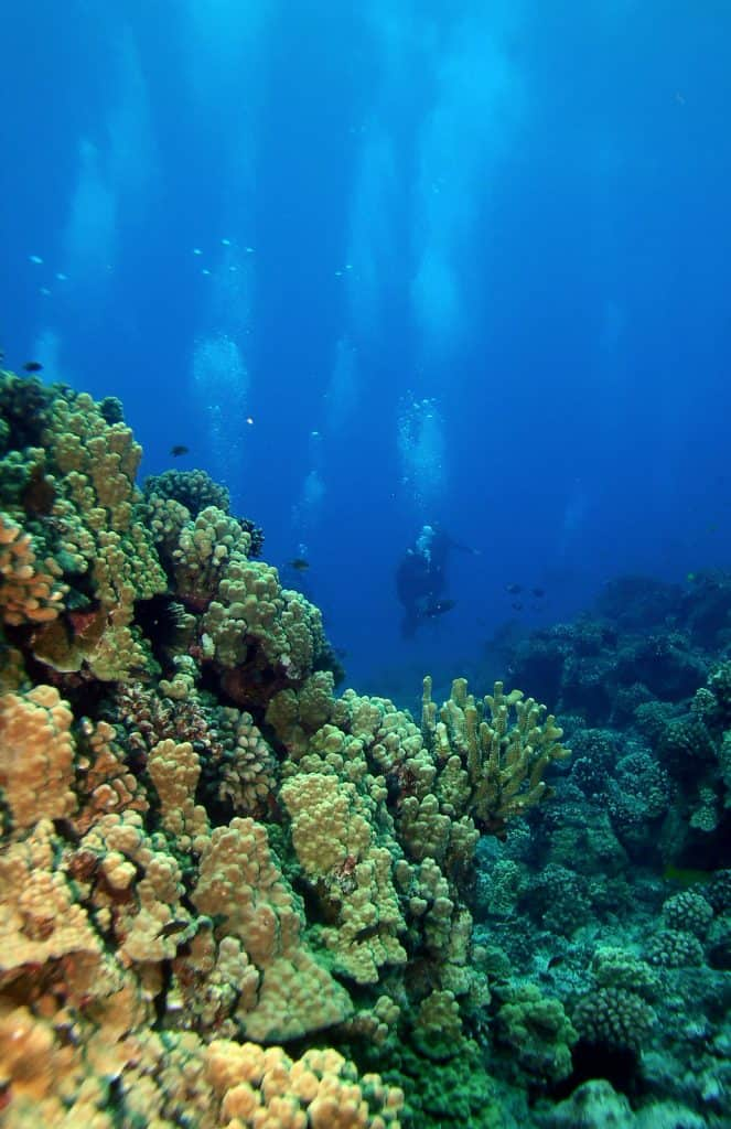 Scuba diver at Maui Hawaii